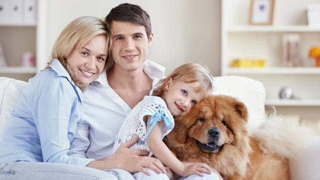Wills & Trusts dog-young-family Direct Wills Wiltshire